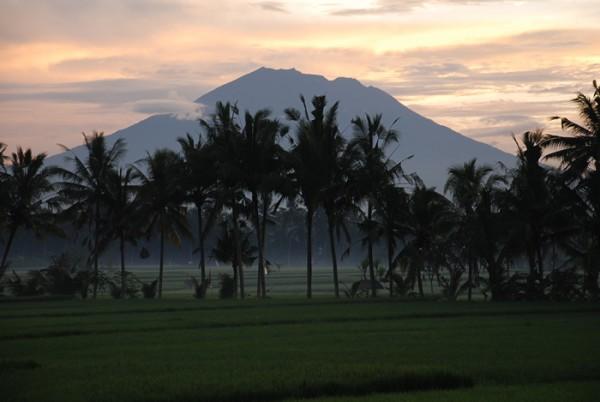 田んぼの上にかかる靄が綺麗です。